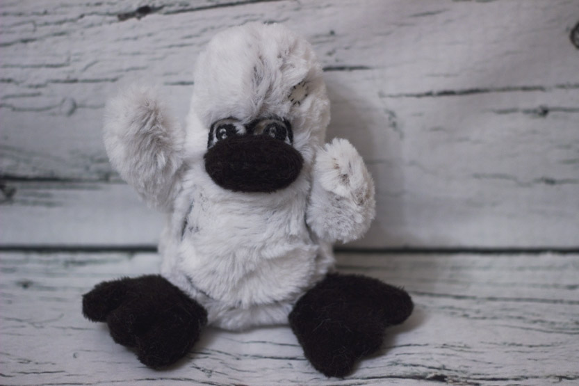 Patch Penguin ready for adoption!